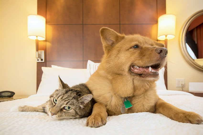 Dog and Cat on Bed